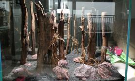 直沉木雨林骨架求大神指点