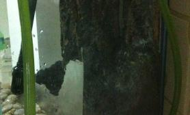 水草造景好大一棵树鱼缸水族箱鱼缸水族箱鱼缸水族箱(P2最新图片)