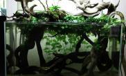 沉木青龙石原生态鱼缸19