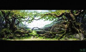 2013ADA大赛第二名水草缸超经典的沉木造景