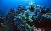 水族海绵动物的品种分类