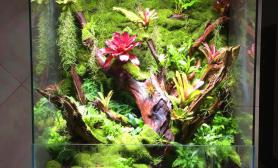 沉木空气凤梨水陆造景水景堂苔藓背景墙写意水景