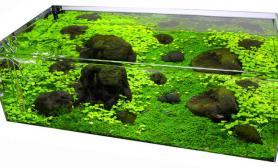 沉木青龙石水草造景60CM尺寸设计31