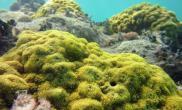 珊瑚礁或将在2100年消失(图)