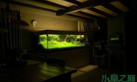 水草造景作品:水草造景(180cm)-111