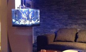 沉木青龙石造景缸与家装空间-49