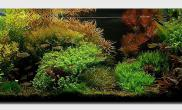 Aquascape of the Month April 2008: