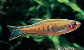 淡水鱼按盐分浓度的分类