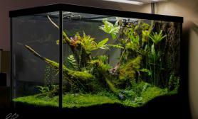 雨林生态缸小品一枚