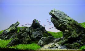 造景水草之路水草造景(90CM)青龙石造景水草
