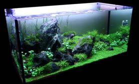 水草缸造景沉木水草泥化妆砂青龙石90CM尺寸设计52