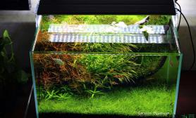 水草造景Larsson Aquarium 45*30*30
