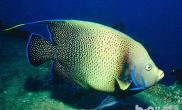 七彩神仙鱼每个阶段的养殖需要注意什么