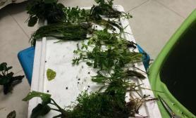 水草造景我的小缸3