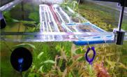 自制LED灯养的水草