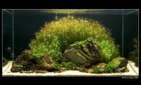 水草缸造景沉木水草泥化妆砂青龙石90CM尺寸设计41