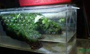 别怀疑鱼缸水族箱这也是水陆生态缸