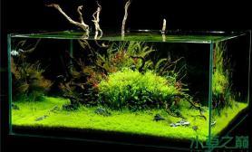 方缸里的水草