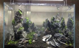 45 30 30小缸景(已更新至5月16日)~鱼缸水族箱鱼缸水族箱鱼缸水族箱