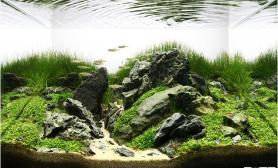 水草缸造景沉木水草泥化妆砂青龙石45CM及以下尺寸设计48