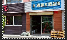 国内水族店水草缸造景青海西宁尺寸设计水森林