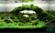 水草造景作品:水草造景(90cm)-12