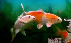 观赏鱼升温的原理分析