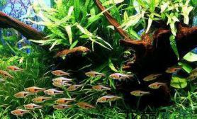 水草缸养什么鱼