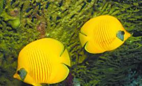 热带鱼啥样的更好养图尺寸设计