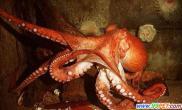 上海海洋水族馆又添新鱼种灵巧章鱼开瓶取食(图)