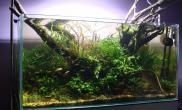 造景之路水草缸造景原生态鱼缸16