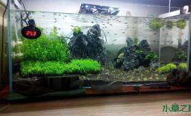 水草造景新手开缸水草缸欢迎点评水草缸求不吐槽