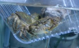 新手造景~~有图水草缸有螃蟹水族箱图片