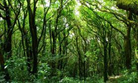 [转贴] 45cm的森林造景缸
