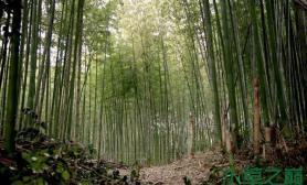 水族箱造景水草造景---夏季竹林