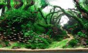 水草造景作品:水草造景(120cm)-123