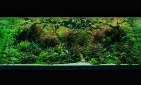 1440×900的ADA造景大赛图