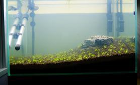 上岸两年水草缸如今我又入水鱼缸水族箱