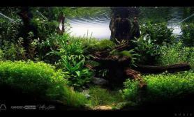 经典水草造景收藏集(六)