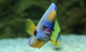 水质酸碱对鱼的影响(图)