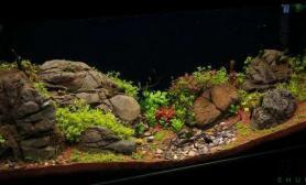 原来鹅卵石在水草缸里也是可以很漂亮的鱼缸水族箱