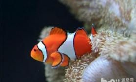 灯光色彩对热带鱼的影响
