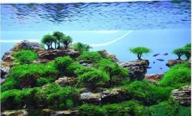 水草造景【积分美图】支持捕分活动水草缸爆管理美照鱼缸水族箱