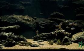 【造景欣赏】野味原生鱼儿漫游