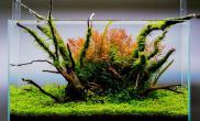 水草造景(60CM)沉木MOSS缸