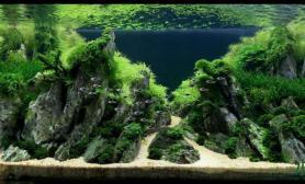 水族箱造景水草造景中的霸气之作---群岚起伏