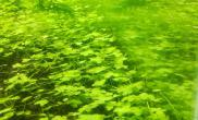 水草造景出自养水草
