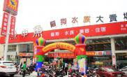 台湾水族店水草缸造景魚中魚水族台南永康店