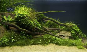 挑选观赏水草的原则和经验