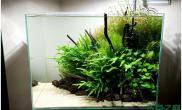 水族箱造景水草状态不错鱼缸水族箱